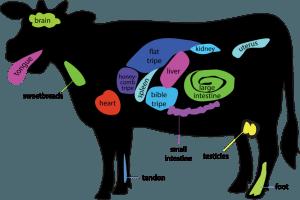 cow organs