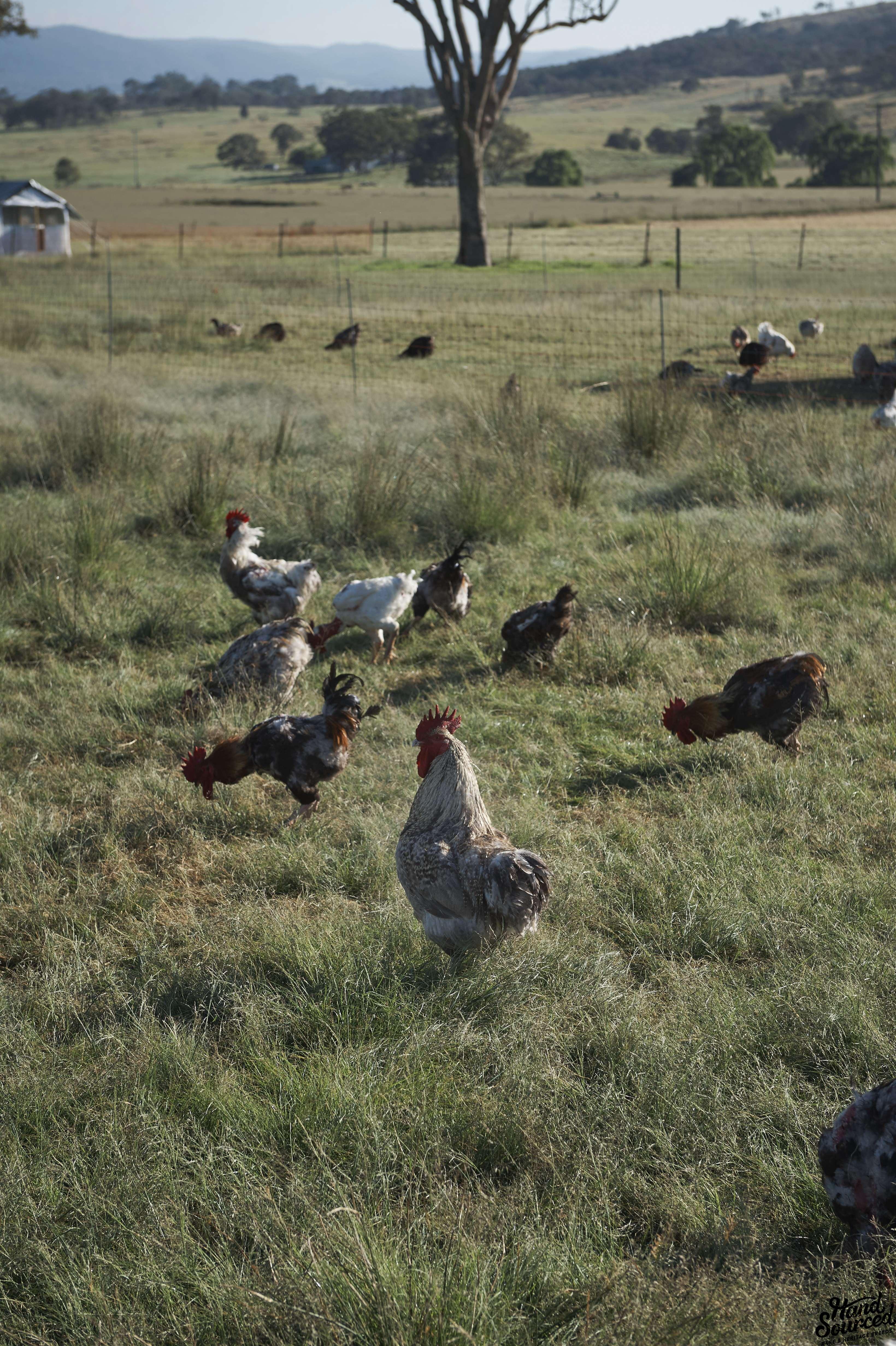 Sommerlad Poultry Earl Carter