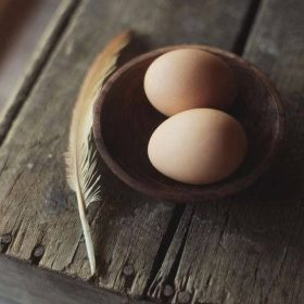 buy ethically raised eggs at hand sourced